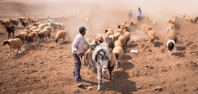 EAs accompany Bedouin shepherds in Jordan Valley
